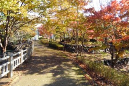 紅葉の東ヶ丘公園