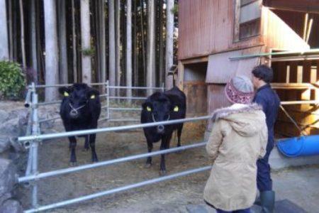 TORAJIさんの牛たち