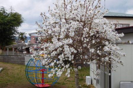 牧師館のお花たち⑤