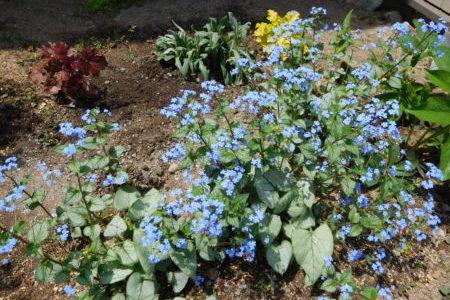 牧師館のお花たち⑥