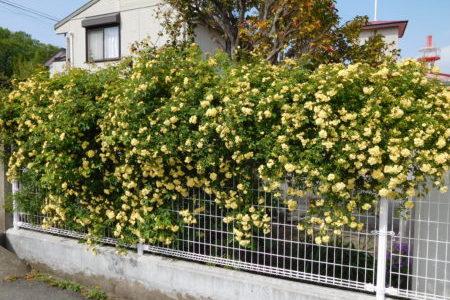 牧師館のお花たち⑦